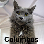 Columbus was adopted from the Cat House and Adoption Center on Saturday, May 21, 2016.<br /> <br /> Columbus<br /> <br /> Land Ho!<br /> <br /> Lost at sea without food and water, Columbus was very sick with jaundice. With a lot of encouragement, he began to eat again. This Captain needs a permanent place at the wheel and co-captain to help navigate his way on the inside passage. Life is good and catnip keeps him happy.