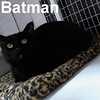 Batman and Robin were adopted from the Cat House and Adoption Center on Saturday, April 9, 2016.