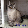 Bailey was adopted from the Cat House and Adoption Center on Saturday, March 5, 2016.