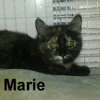 Marie was adopted from the Cat House and Adoption Center on Saturday, March 5, 2016.