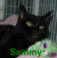 Sammy was adopted from the Cat House and Adoption Center on Saturday, January 16, 2016