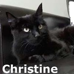 Christine (and Christmas) was adopted from her foster home at Steamboat Animal Hospital on Saturday, November 14, 2015.