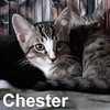 Tweety and Chester were adopted from the Cat House and Adoption Center on Saturday, April 9, 2016.