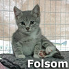 Folsom Prison Blues and A Boy Named Sue (sister and brother) were adopted together from the Cat House and Adoption Center on Saturday, November 14th, 2015.
