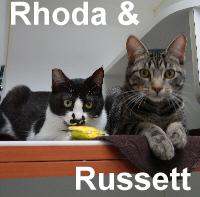 Rhoda and Russett were adopted from the Cat House and Adoption Center on Saturday, February 27, 2016.