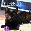 Blackbird and Mr. Kite were adopted from the Cat House and Adoption Center on Monday, August 15, 2016.<br /> <br /> Blackbird<br /> <br /> Cute and curious.<br /> <br /> This little adorable guy uses his innovation to keep himself entertained and has quite the time playing endlessly. Always ready to be loved, a quick nap and he's ready for the next adventure.