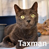 Taxman was adopted from the Cat House and Adoption Center on Saturday, May 14, 2016.<br /> <br /> Taxman<br /> <br /> Cos I'm the Taxman.<br /> <br /> The percentage of time I want to spend with you, I will give you all 100%. Super sweet, this handsome fellow is young, active and is ready to spread the happiness that surrounds him.