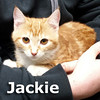 Jackie was adopted from her foster home at South Bay Animal Hospital on Wednesday, February 17, 2016.