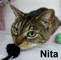 Nita was adopted from the Cat House and Adoption Center on Saturday, September 3, 2016.<br /> <br /> Nita<br /> <br /> Loved before and will be again.<br /> <br /> Just being on the street without shelter or food was the life for her, she got trapped. Not an ounce of feral, just unsure initially. Enjoying a little catnip make everything brighter and being able to sleep peacefully is given her a new lease on life.