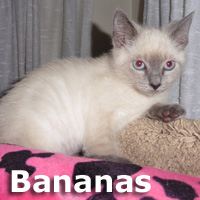 Quince and Bananas were adopted together from the Cat House and Adoption Center on Saturday, August 13, 2016.