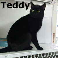 Teddy was adopted from the Cat House and Adoption Center on Saturday, January 9, 2016.