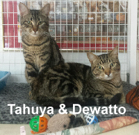 Tahuya and Dewatto were adopted from the Cat House and Adoption Center on Saturday, February 27, 2016.