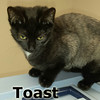 Toast was adopted from her foster home at Steamboat Animal Hospital on Monday, January 4th, 2016.