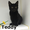 Teddy was adopted from the Cat House and Adoption Center on Saturday, August 13, 2016.