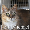 Fern Michael was adopted from the Cat House and Adoption Center on Saturday, August 6, 2016.