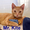 Blackbird and Mr. Kite were adopted from the Cat House and Adoption Center on Monday, August 15, 2016.<br /> <br /> Mr. Kite<br /> <br /> For the benefit of Mr. Kite ...<br /> <br /> There will be a show tonight on the trampoline. This fine and talented young man can entertain you for hours with the simplest of toys and the amount of charm he exudes. Too adorable!
