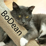 BoDean was adopted from the Cat House and Adoption Center on Saturday, November 14, 2015.
