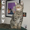 Casey was adopted from the Cat House and Adoption Center on Sunday, July 10, 2016.<br /> <br /> Casey<br /> <br /> A Gemini?<br /> <br /> With a face of two colors, this beautiful girl is a little shy and yet craves the love she is given. Rescued twice, we want to ensure she gets a forever home and one that sees her internal and external beauty and tenderness.