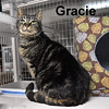 Gracie was adopted from the Cat House and Adoption Center on Friday, May 27, 2016.<br /> <br /> Gracie<br /> <br /> Devine Grace.<br /> <br /> Life is better. After living in a trailer with many other cats, Grace is happy to have her own space and clean living. The struggles of being from a multi-cat community are challenging and Grace seems to have found comfort away from it.