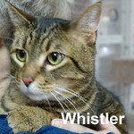 Whistler was adopted from the Cat House and Adoption Center on Saturday, January 16, 2016