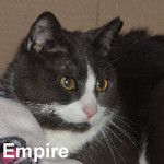 Empire was adopted from the Cat House and Adoption Center on Saturday, August 6, 2016.<br /> <br /> Empire<br /> <br /> A new galaxy awaits.<br /> <br /> He is on top of the world now that Darth Vader is not looming over him and he is no longer mentoring Luke. Empire is very sweet and loves attention in quiet times and would do well in a household that is not busy. He looks forward to see what the next saga brings.