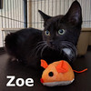 Zoe was adopted from the Cat House and Adoption Center on Saturday, September 3, 2016. <br /> <br /> Zoe<br /> <br /> Loyal friend.<br /> <br /> She is calm, cool and collected, and much prefers the company of the adult cats in her foster home over the kitten antics. Zoe wants from you the patience to win her confidence and your reward will be her unconditional loyalty.