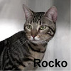 Rocko was adopted from the Cat House and Adoption Center on Saturday, May 21, 2016.
