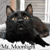 Mr. Moonlight was adopted from the Cat House and Adoption Center on Saturday, June 4, 2016.