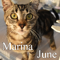 Marina June was adopted from the Cat House and Adoption Center on Saturday, July 2, 2016.