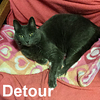 Detour was adopted from the Cat House and Adoption Center on Saturday, February 13, 2016.
