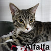 Alfalfa was adopted from the Cat House and Adoption Center on Saturday, January 2, 2016.