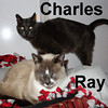 Ray and Charles were adopted from their foster home on Thursday, August 11, 2016.<br /> <br /> Ray and Charles<br /> <br /> Dashing duo.<br /> <br /> With visual impairment, Ray keeps close tabs on Charles and the bond that is shared needs to be treasured. Abandoned outside and living under a porch or in the bushes, their survival instinct was strong over the years and they are so grateful to be in and loved.