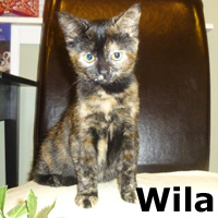 Wila was adopted from the Cat House and Adoption Center on Saturday, November 28, 2015.
