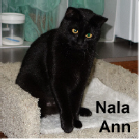 Nala Ann was adopted from the Cat House and Adoption Center on Saturday, December 26, 2015.<br /> <br /> Nala Ann<br /> <br /> Nala Ann can be found surfing the web and recently joined eHarmony looking to find that special love. If you are tired of the singles scene and ready for commitment, Nala Ann wants to meet you. She is ready for long naps on gloomy days, enjoys sitting in the sunshine and quiet talks by the firelight.