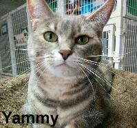 Yammy was adopted from the Cat House and Adoption Center on Saturday, December 12, 2015.