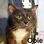 Obie was adopted from the Cat House and Adoption Center on Saturday, July 30, 2016.<br /> <br /> Obie<br /> <br /> Obi-Wan<br /> <br /> A master and a friend. Handsome and lucky, Obie is a darling boy with a zest for life and living outside of a crate. He is eager to please, can't resist a loving hand, and always is ready at meal time for whatever appears in the dish.