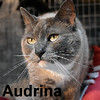 Audrina was adopted from the Cat House and Adoption Center on Saturday, May 28, 2016.<br /> <br /> <br /> Audrina<br /> <br /> Lost or just unwanted?<br /> <br /> Audrina is a jewel and just beautiful. Smelling of perfume and clean, this girl was obviously just not wanted any longer. She is very sweet and loves attention. Her Siamese heritage is almost overshadowed by the darkness of her coat.