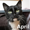 April Gnome was adopted from the Cat House and Adoption Center on Saturday, January 16, 2016.<br /> <br /> April Gnome<br /> <br /> Magical girl.<br /> <br /> This young lady is sweet and social, loving and playful. Ready for a chance to have a stable home where she is part of the family where love and care go hand in hand. Rescued from a place where she was left to fend for herself ... along with the other cats.