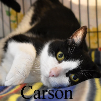 Carson was adopted from the Cat House and Adoption Center on Saturday, July 16, 2016.<br /> <br /> Carson<br /> <br /> King of the Cat House.<br /> <br /> He's not running for president or hosting late night TV, he is just comfy and cozy with room service at the Adoption Center. A little confused on why he got displaced and yet he is happy to get all the loving you can give. He is a social guy with a tender heart.