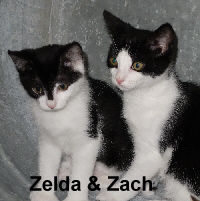 Zach and Zelda (brother and sister) were adopted from the Cat House and Adoption Center on Saturday, July 23, 2016. <br /> <br /> Zelda and Zach<br /> <br /> Purrfect pair! Get your catcher's mitt and get ready to play ball with these two. Big paws and big hearts, Zelda and Zach will be sure to win you over.