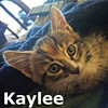 Kaylee was adopted from the Cat House and Adoption Center on Saturday, August 13, 2016.<br /> <br /> Kaylee<br /> <br /> Genuine and sweet.<br /> <br /> She will keep your ship sailing with ingenuity and elbow grease. And also chase out any toys that may get stuck in the gears. Kaylee will come in close for a snuggle and purr delightedly once she's content.