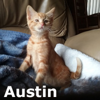 Austin was adopted from the Cat House and Adoption Center on Saturday, July 30, 2016.<br /> <br /> Austin<br /> <br /> Within city limits or out, Austin rocks! Playing is his middle name, so a band mate would be nice for accompaniment.