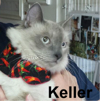 Keller (blind and deaf) and Wilbur were adopted from the Cat House and Adoption Center on Saturday, April 2, 2016.