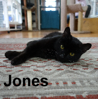 Jones was adopted from the Cat House and Adoption Center on Saturday, July 23, 2016.<br /> <br /> Jones<br /> <br /> Can you keep up with Jones?<br /> <br /> This handsome young guy has long legs, a smooth velvet coat, and a loving purrsonality and is easy to keep up with. His gentle soul and sweet nature will capture your heart. Look beyond color, it is about personality.