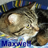 Maxwell was adopted from the Cat House and Adoption Center on Saturday, July 30, 2016.