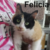 Felicia was adopted from the Cat House and Adoption Center on Saturday, July 2, 2016.