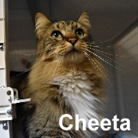 Pennie and Cheeta were adopted from the Cat House and Adoption Center on Friday, February 19, 2016.<br /> <br /> Pennie and Cheeta<br /> <br /> Sunshine and roses.<br /> <br /> These two siblings are happy go lucky and have settled into the routine fine, as long as they have each other. Double your pleasure, double the fun, two cats is better than one.
