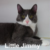 Little Jimmy was adopted from the Cat House and Adoption Center on Saturday, March 5, 2016.