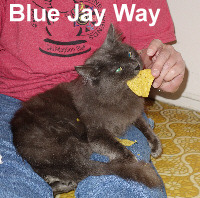Blue Jay Way was adopted from the Cat House and Adoption Center on Saturday, May 21, 2016.