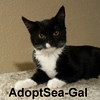 Sea-Gal was adopted from the Cat House and Adoption Center on Saturday, June 4, 2016.